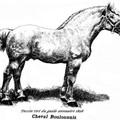 Historique de la Race Boulonnaise