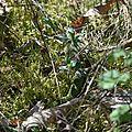 lezard vert (2)