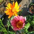 Fleurs 021