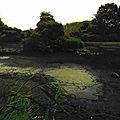 Compte-rendu : <b>Ornithologie</b> et découverte de la Nature au marais d'Itteville