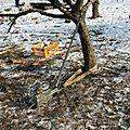 IMG_2675 Sécuristion des abattages à l'aide du treuil manuel