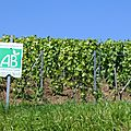 Formations en <b>viticulture</b> bio