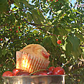 Muffins cerise / amande