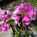 Fleurs de la terrasse, elles s'y plaisent !