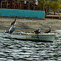 Barque aux palicans