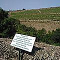 La Pipette aux quatre vins
