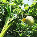 Les bananes de la poterne