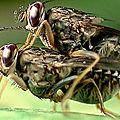 le vol de la mouche en milieu confiné