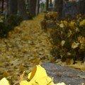 Au revoir, l'automne...