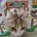 Cookie et les playmobils