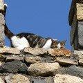 chat à Chadeleuf 2