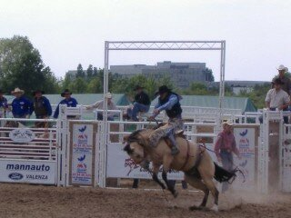Rodeo and stuff 5