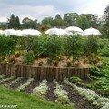 Des tomates protégées des aléas climatiques…!