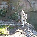 Audubon Park et Zoo (57)