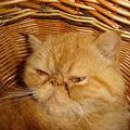 Garfield dans son panier