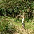 Forêt du Tévélave