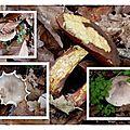 champignons ... a volonte
