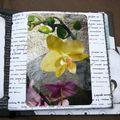 orchidées 13