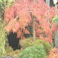 Parc Expo2010-Foli'Flore § bonsai (3)