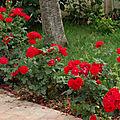 mon jardin cette année