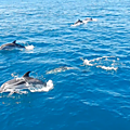 Dauphins en liberté dans le <b>Golfe</b> de <b>Corinthe</b> - Dolphins playing in the Gulf of <b>Corinth</b>