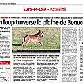 Nouvelle observation de Loup en <b>Eure</b>-et-<b>Loir</b>.