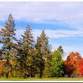 Arboretum de chèvreloup (78)