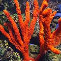 Les <b>récifs</b> coralliens surveillés par satellite