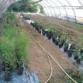 Jardins de la haute comté