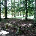 En sous bois dans le Parc de Bouges (36)