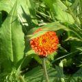 belle fleur de montagne