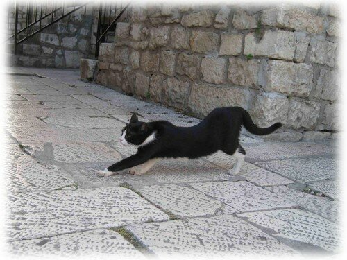 chat Trogir 1 album