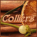 colliers Automne