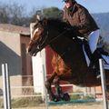 mes chevaux... ma passion... ma vie...