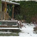 Automne sous un peu de neige