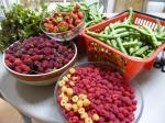 27-récoltes du jour (3)