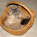 Un panier à chat... euh non.. c'est mon panier à champignons...!!