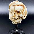 Memento mori half head, half skull, European, <b>19th</b> <b>century</b>