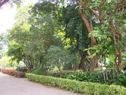 Puerto de la Cruz-jardin botanique-allées 2