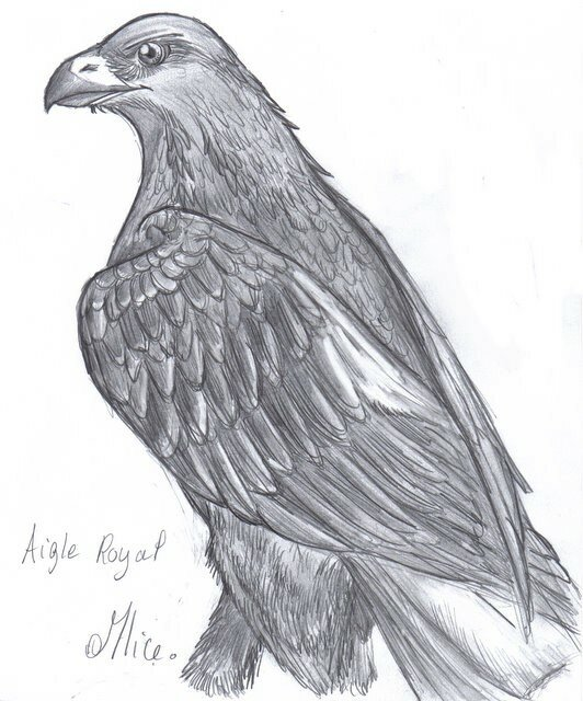 Aigle royal mlice blog de dessin amateur - Dessin d aigle royal ...