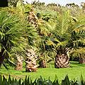 <b>Jardin</b> <b>exotique</b> de Saint-Renan