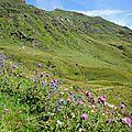 Montagne de Couecq et flore, Vallée d'Aspe (64)