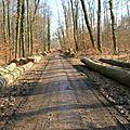 A5 - Toujours dans les bois