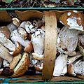 Le cèpe dont rêvent tous cueilleurs de champignons