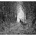 Kevin Curtil photos nature
