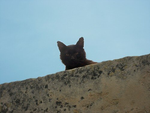 Provence chat 17