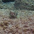 Apnée en mer des Caraïbes