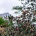 Mon hiver en Provence
