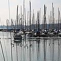 Oiseauxport_12 13 02_1545