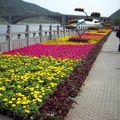 C'est la saison des fleurs, et nous sommes dans la ville des fleurs.